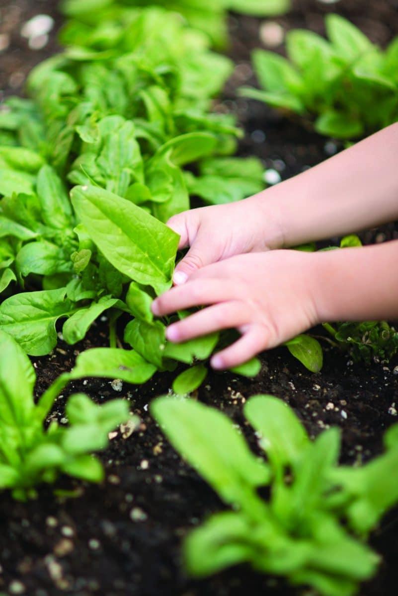 Garden Of Wonder How Gardening And Greenhouse Activities